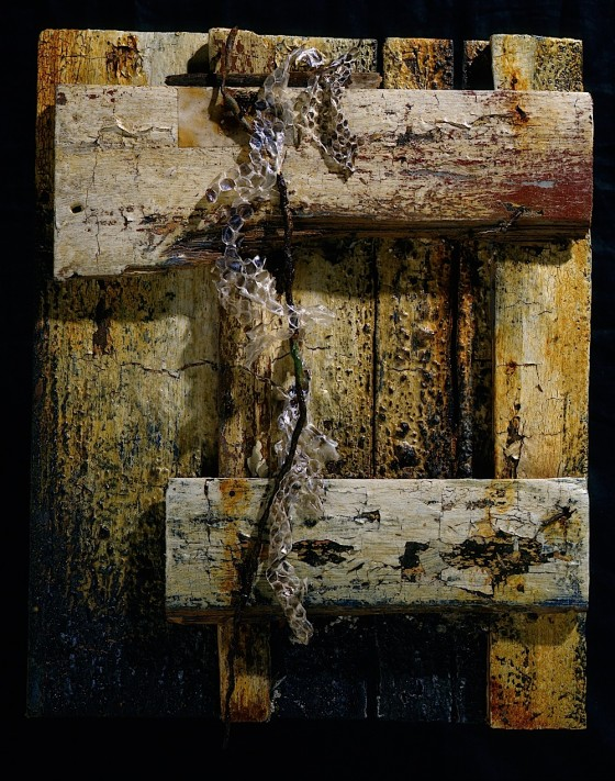 Memory's Wound 1997 Oils, acrylics, emulsion, burning, rusted metal, snake skin, on wood 30.5 x 38 cm